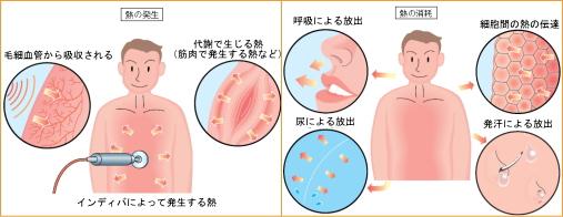ヒトの熱温熱調節機能